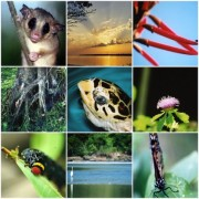 noticia-biodiversidade