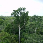 noticia-amazonia-co2