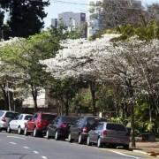 noticia-londrina-arvore-