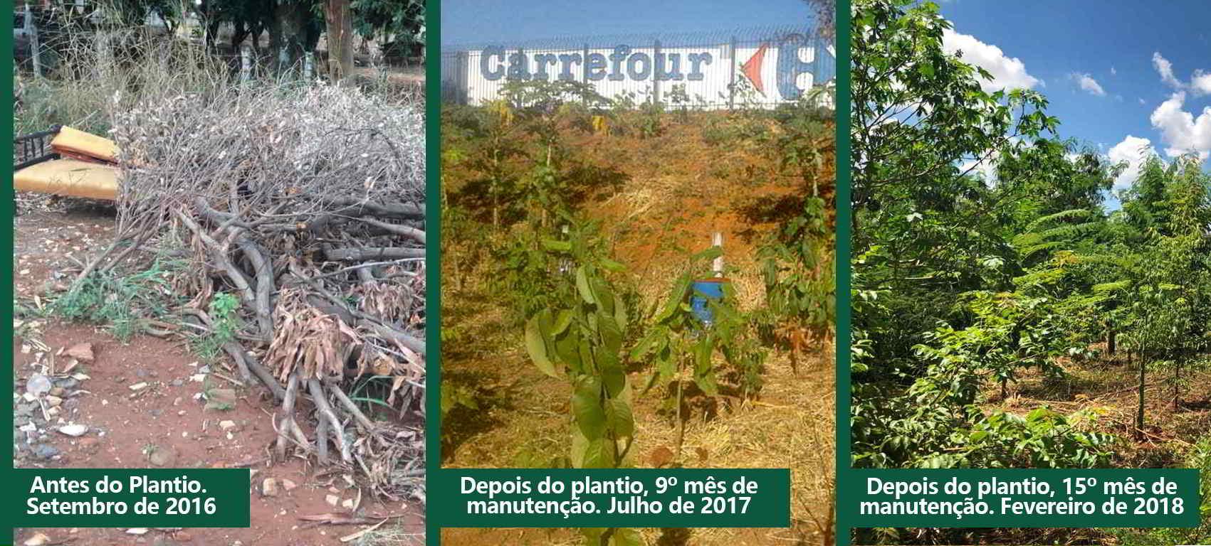 No perímetro urbano da capital goiana, a Área de Preservação Permanente –  APP do Córrego Cascavel, no terreno aos fundos do Carrefour, estava  degradada. 7bda2bbd1a