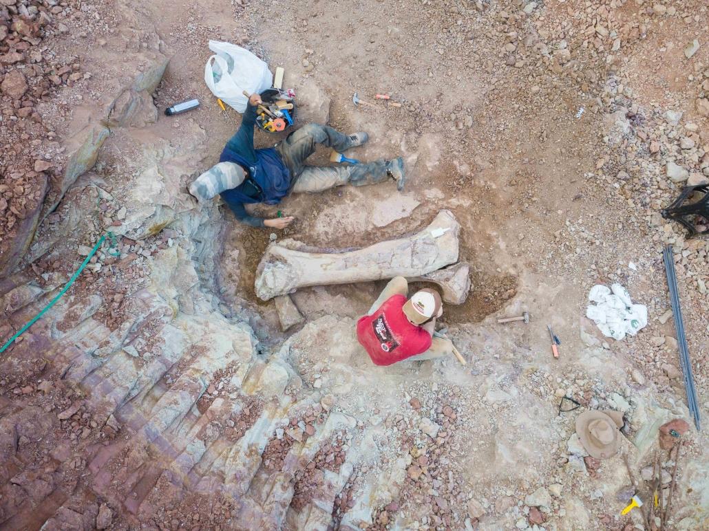 descoberta de fóssil de dinossauro em obra de terminal ferroviário é destaque de hoje na Folha de São Paulo